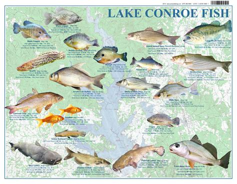 fishing maps texas lake conroe fish records