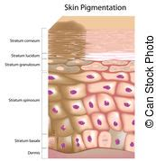 human skin texture stock photo 169 oksixx 122414784 skin structure clipart vector and illustration 3 454 skin structure clip vector eps images
