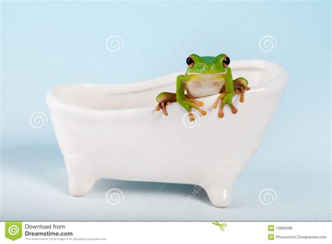 frog in bathtub frog on bath royalty free stock photos image 10983568