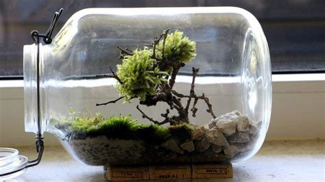 Homemade Bonsai Moss Tree Terrarium   YouTube