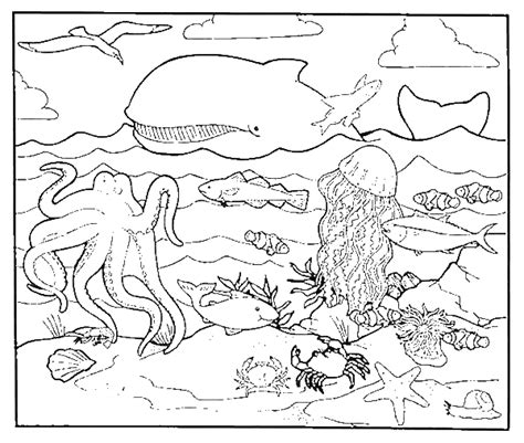 animal ocean habitats coloring pages