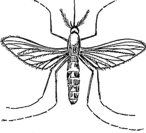mosquito insect coloring pages to printable cartoon