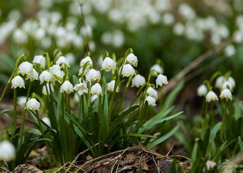 fiori nord stunning piante da terrazzo esposto a nord ideas design