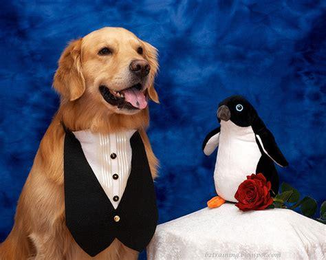 puppy tuxedo diy tuxedo petdiys