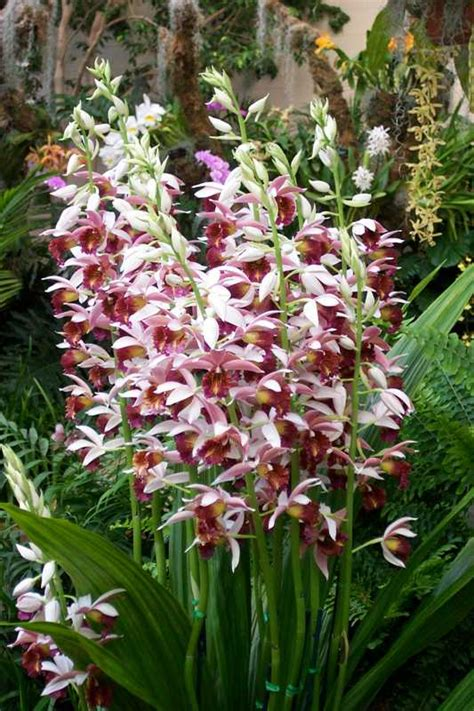 Orchid Plant Top 10 Orchids For The Home