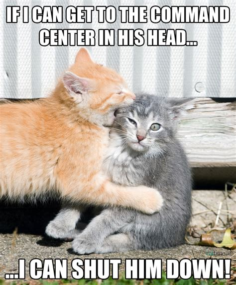 cat memes cat memes 25 ways to laugh cattime