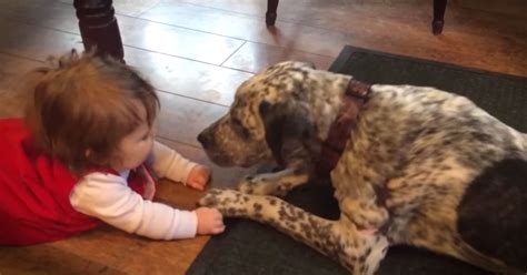 dogs meeting babies dogs meet babies for the time compilation