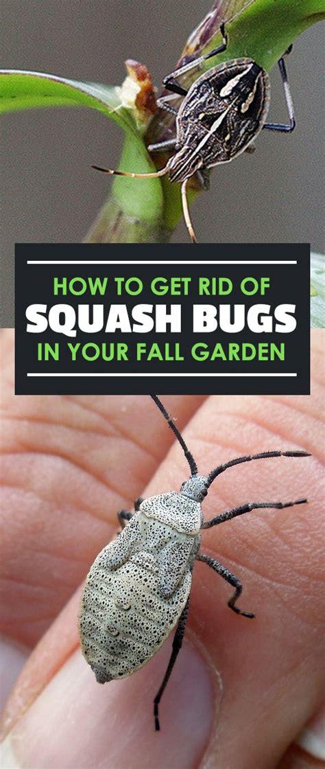 how to get rid of backyard bugs best 25 identify bugs ideas on pinterest identify plant