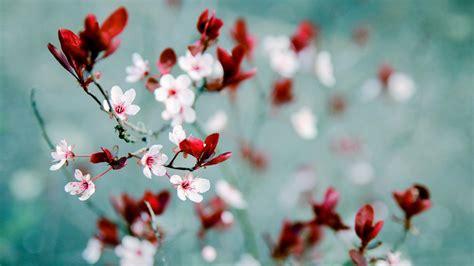 wallpaper hd 1920x1080 flowers hd wallpaper spring flowers 2018 wallpapers hd