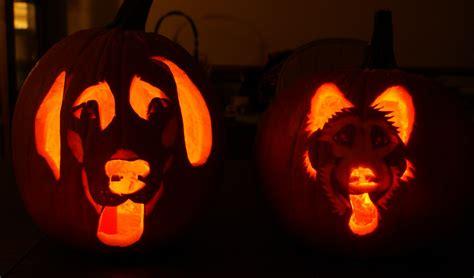 puppy pumpkin carving babbling pumpkin carving