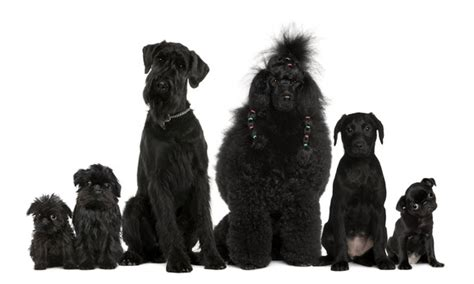 names for black dogs black names naming dogs