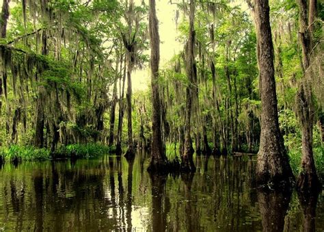 sw boat tours near lafayette la 17 best images about louisiana sws and bayous virtual