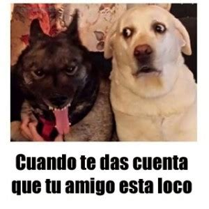 imagenes chistosas de animales con frases graciosas im 225 genes de perros con frases para facebook 3