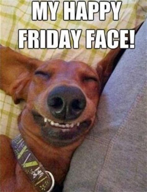 my friday happy face funny dog meme never shutup