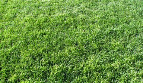 pattern photoshop grass 60 best photoshop grass textures free psd download free