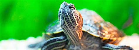 turtle tortoise food   feed  pet petsmart