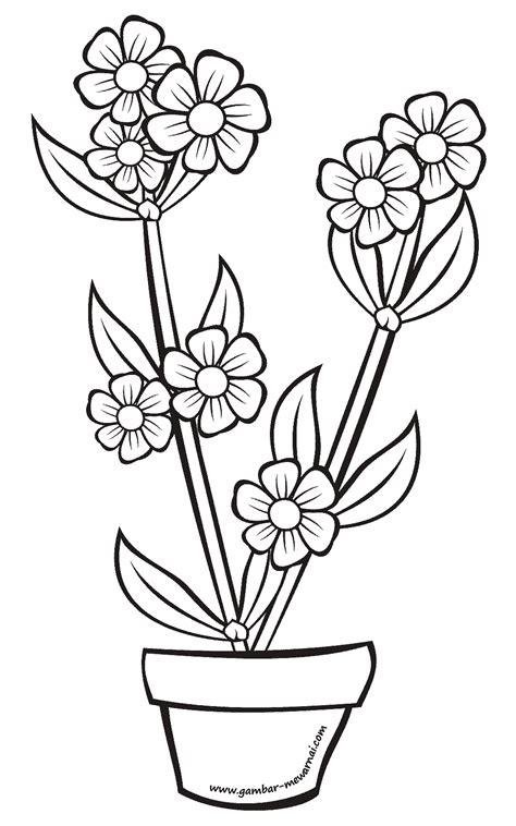 Gambar Dalam Bunga Kembang Sepatu - Informasi Seputar