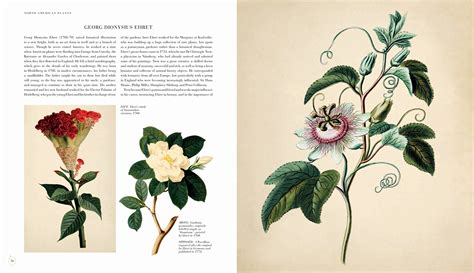 golden age of botanical 0233003649 golden age of botanical art 163 24 95 botanical art general new rare and out of print books on