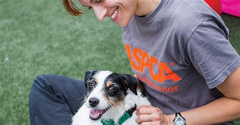 second chance dogs aspca documentary second chance dogs now available on netflix aspca