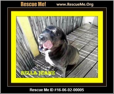 average age golden retrievers live florida golden retriever rescue adoptions rescueme org