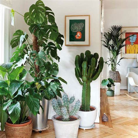 Plants At Home | ten reasons to have plants in your home biophilia
