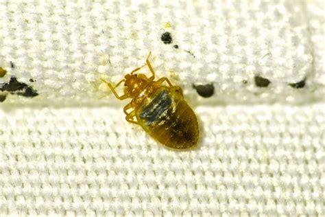 terminix bed bugs cost terminix bed bugs cost terminix bed bugs cost rugby stripe bedding five
