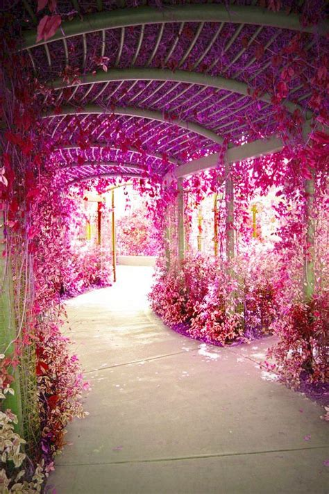 flower tunnel flower tunnel my garden pinterest