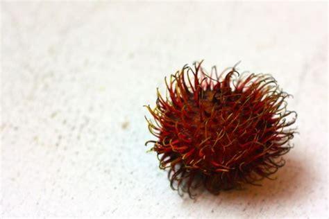 fruit similar to lychee rambutan