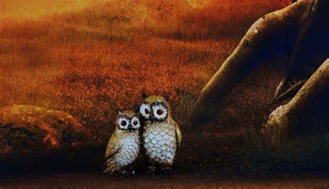 wallpaper owl biru download gambar wallpaper hantu gudang wallpaper
