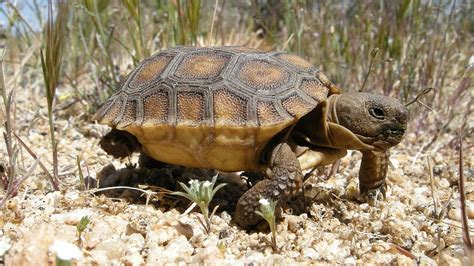 6 Reasons To Get A Tortoise by Save The Animals Eric Blogs