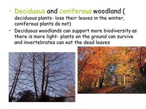 Trees That Shed Their Leaves In Winter by A Habitat Is Where And Organism Lives Ppt