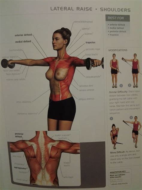 shoulders lateral raise ant medial post deltoid