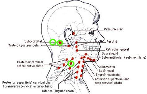 wann kommt der nächste aldi pc schmerzende beulen am kopf lymphknoten sind die