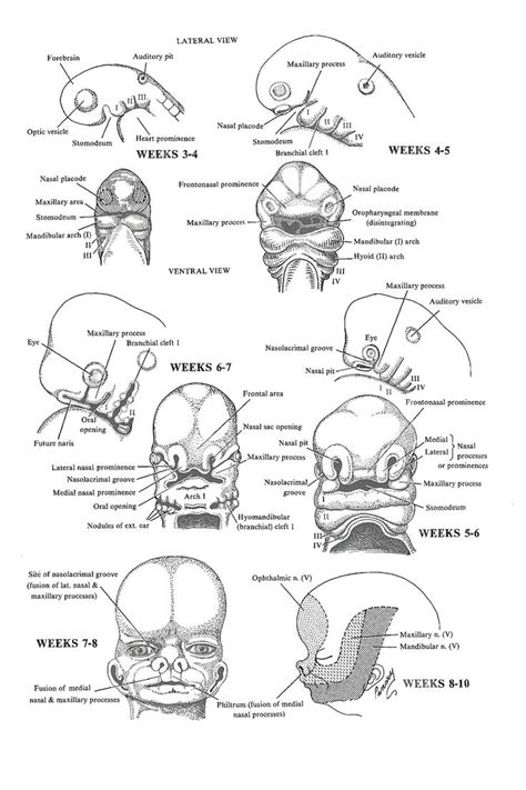Mba Concentrations Explained by 7 Best Embryology Images On Anatomy Anatomy