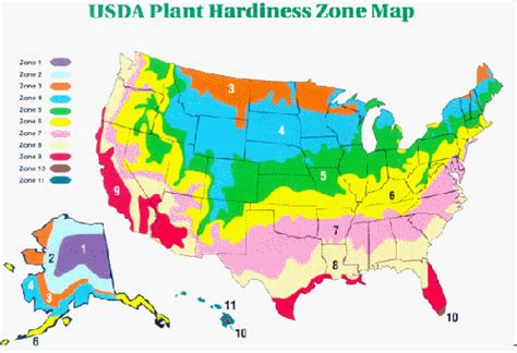 what zone am i in for gardening usda zone map