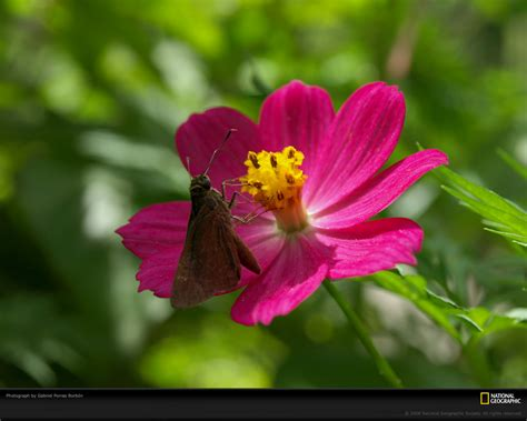 flower wallpaper national geographic national geographic flower wallpaper wallpapersafari
