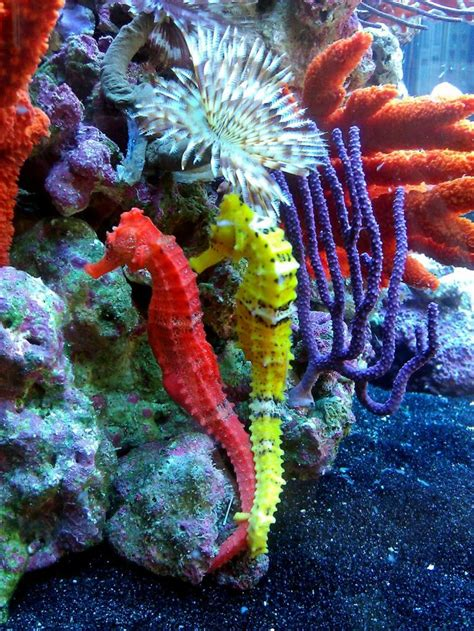 set of two vibrant red coral reef look figurines beach phishy business seahorse tank seahorse pinterest