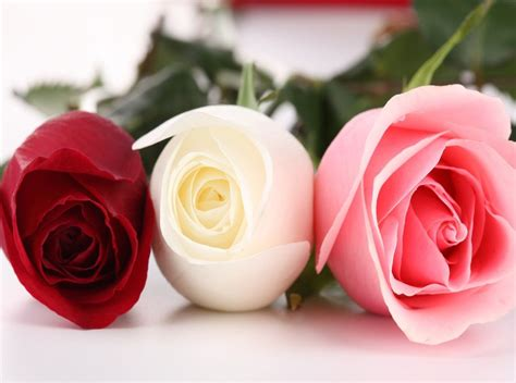 flower expert red and pink roses image pink roses pictures flowers wallpapers red hd wallpapers