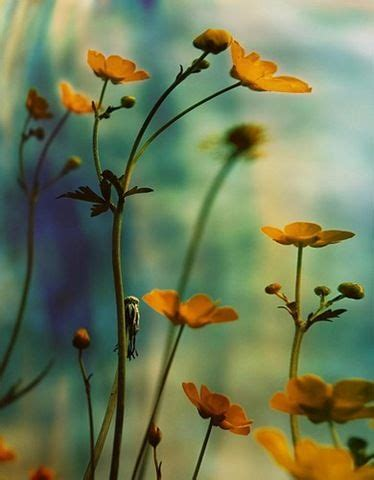 Boni Flowers 8080 2 Best Quality 29 best yellow turquoise images on homes yellow and bedroom ideas