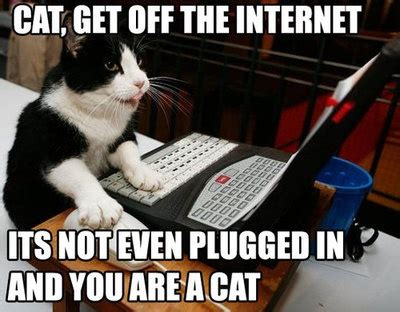 Cat Internet Meme - week 2 communicating on the internet touche