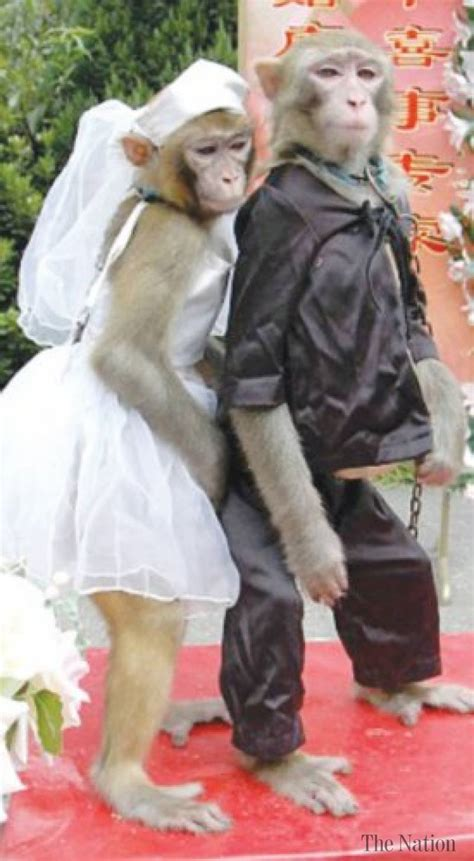 Monkey For Your Wedding by Monkey S Wedding