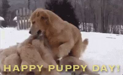 happy puppies gif happy puppy day gif nationalpuppyday discover gifs