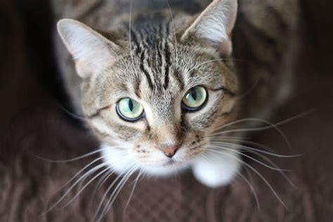 Boneka Kucing Cat 3 Colour Big Eye 9 Cat Images 183 Pexels 183 Free Stock Photos