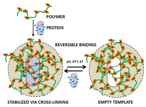 a protein is a polymer of polymers free text polymer directed protein