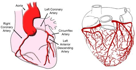 the heart manual my 0061765910 diagram heart chambers dog diagram free engine image for user manual download