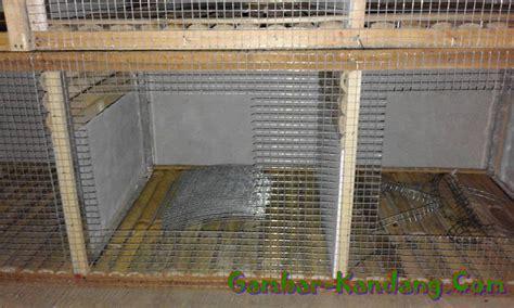 Ram Kawat Kandang cara membuat kandang kelinci sederhana bahan kawat ram bambu dan kayu balok kumpulan gambar