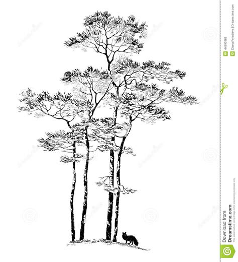 hand drawn pine tree sketch stock vector illustration