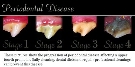 gum disease in dogs all pets dental canine dental care periodontal disease