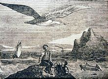 albatross wikipedia