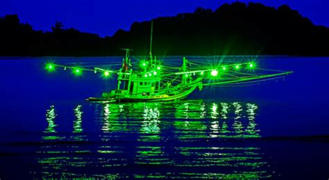 squid fishing at night from a boat thailand squid fishing